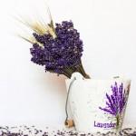 buchet de floare uscata